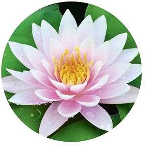 WENKO 21462500 Waschbeckenstöpsel Pluggy® White Lily - Abfluss-Stopfen, für alle handelsüblichen Abflüsse, Kunststoff, 3.9 x 6.5 x 3.9 cm, Mehrfarbig