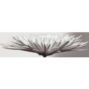 EUROGRAPHICS: Acrylglasbild, Mehrfarbig, B/H 50 180